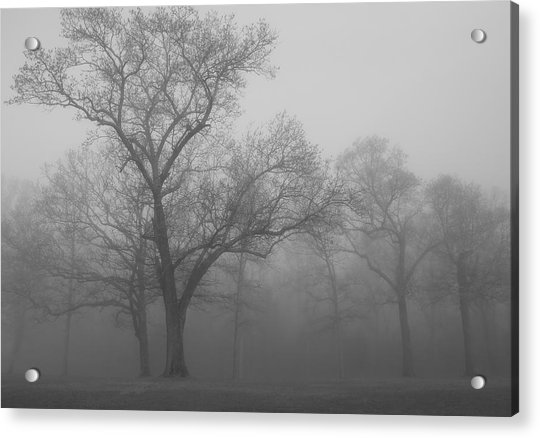 Tree In Black And White Acrylic Print by James Jones
