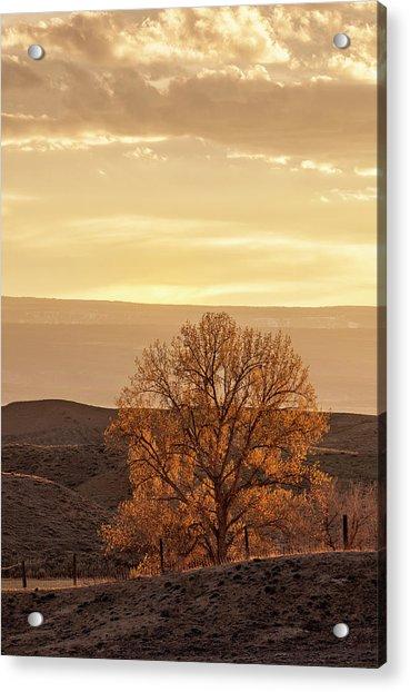 Tree In Desert At Sunset Acrylic Print