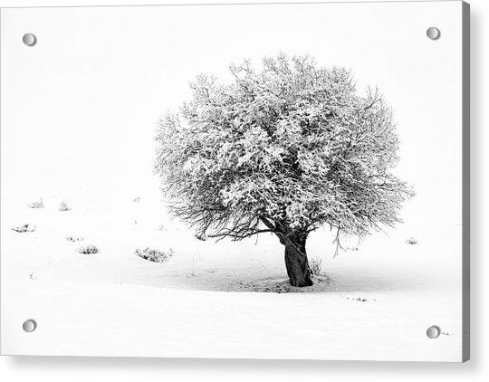 Tree On Snowy Slope Acrylic Print