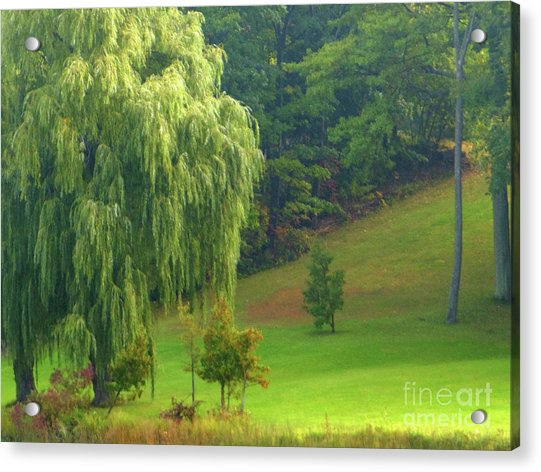 Trees Along Hill Acrylic Print