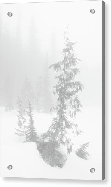 Acrylic Print featuring the photograph Trees In Fog Monochrome by Tim Newton