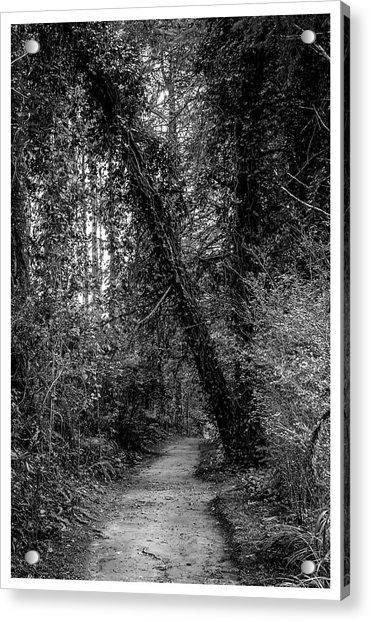 Trilha--bosque Do Silencio-campos Do Jordao-sp Acrylic Print