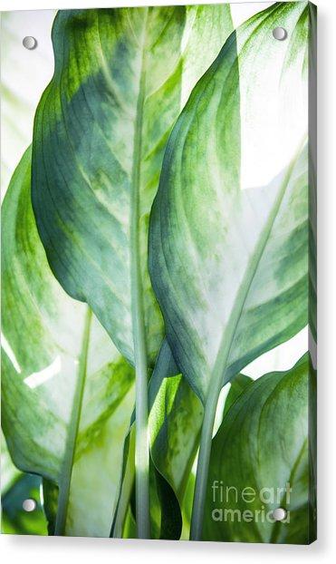 Tropic Abstract  Acrylic Print