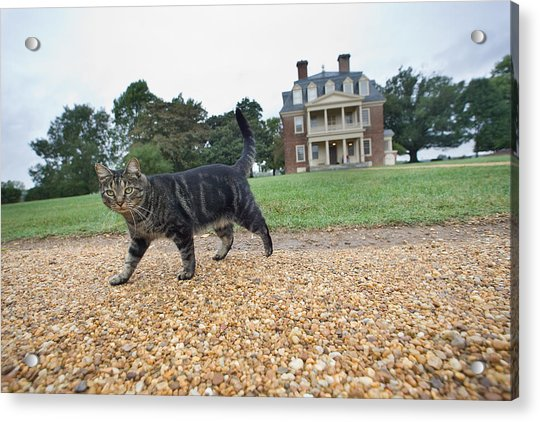 Tuna The Cat Acrylic Print