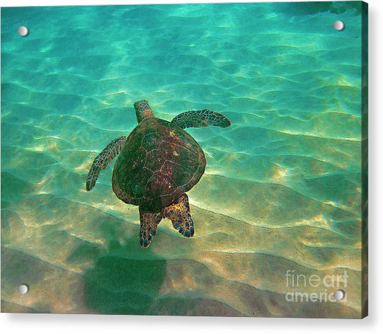 Turtle Sailing Over Sand Acrylic Print
