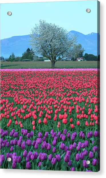 Twilight In Skagit Valley Acrylic Print