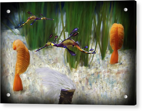 Two Sea Horses Acrylic Print