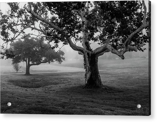 Two Trees Colt State Park Acrylic Print