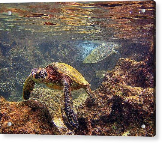 Two Turtles Acrylic Print