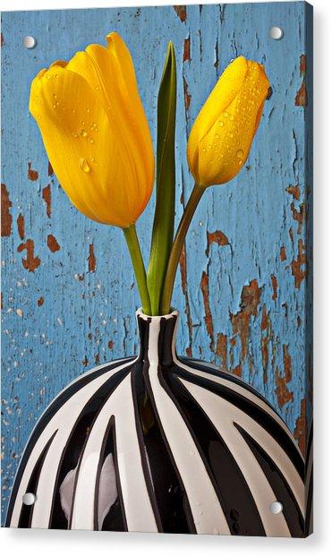 Two Yellow Tulips Acrylic Print