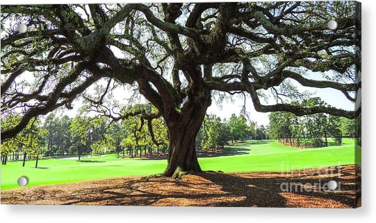 Under An Augusta Oak Acrylic Print