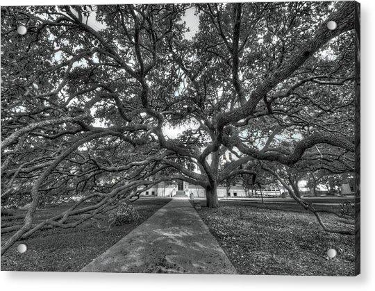 Under The Century Tree - Black And White Acrylic Print