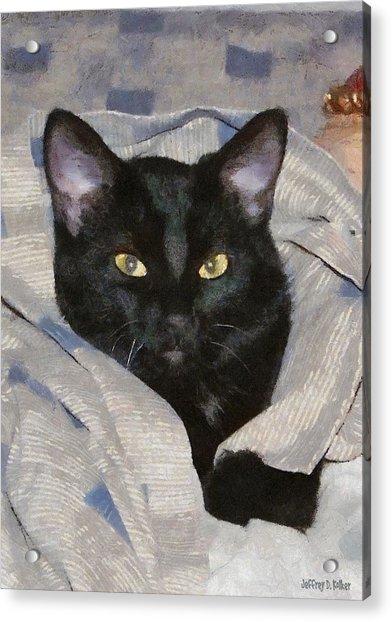 Undercover Kitten Acrylic Print