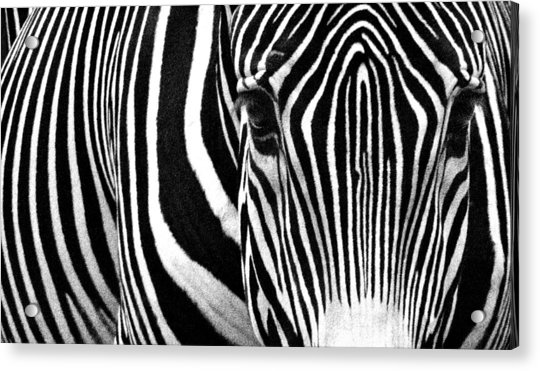 Unique Fingerprint  Acrylic Print by Donna Pagakis