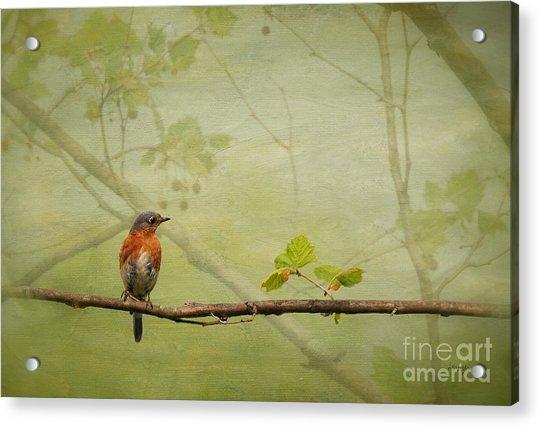 Until Spring Acrylic Print