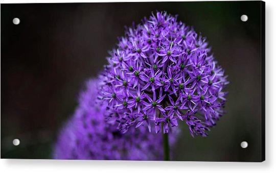 Eternal Purple Acrylic Print