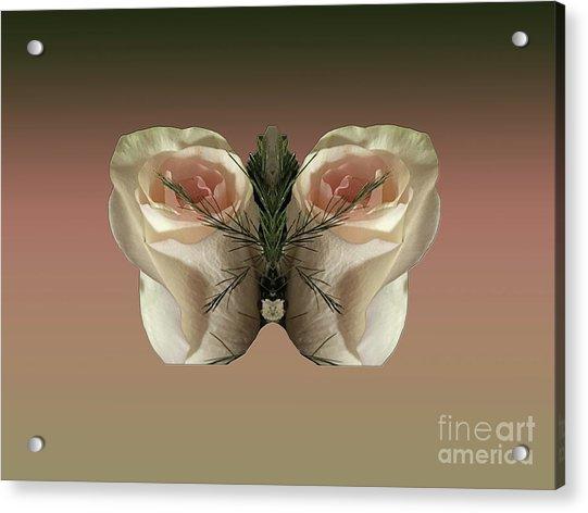 Vanilla Butterfly Rose Acrylic Print