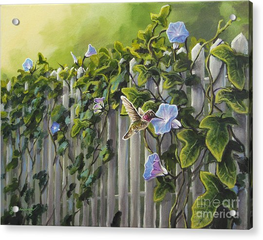 Visiting The Morning Glories Acrylic Print