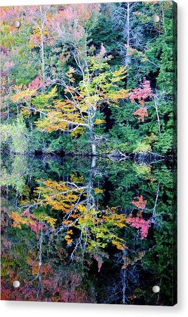 Vivid Fall Reflection Acrylic Print