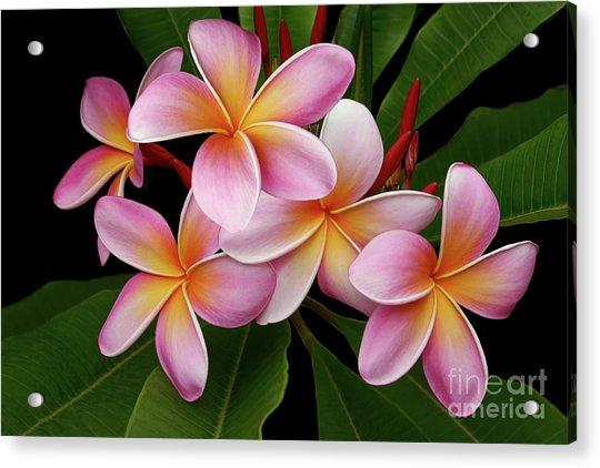 Wailua Sweet Love Texture Acrylic Print
