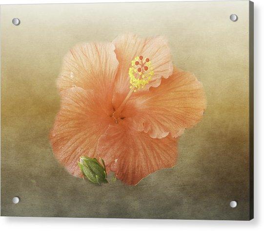 Warm Hibiscus Acrylic Print