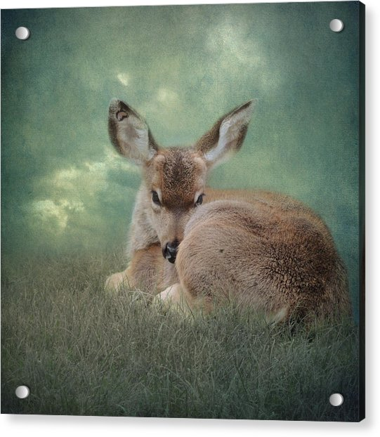 Acrylic Print featuring the photograph Watchful Eye by Sally Banfill