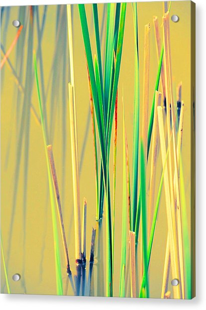 Water Reeds Soft Acrylic Print