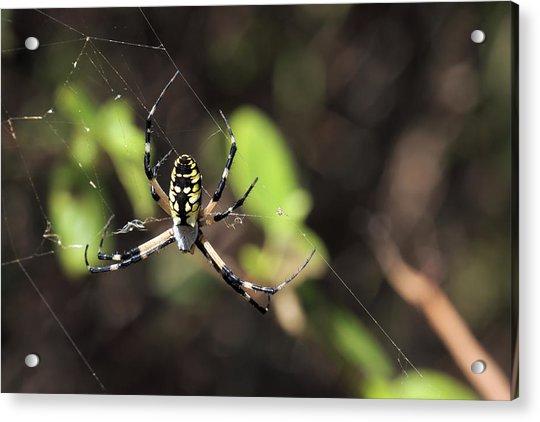 Web Builder Acrylic Print