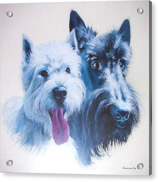 Westie And Scotty Dogs Acrylic Print
