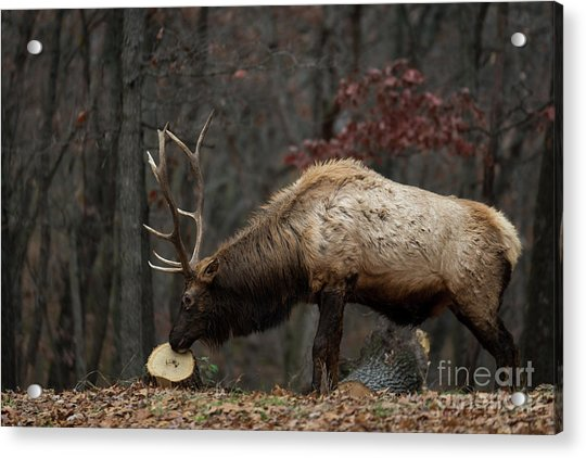 What's This? Acrylic Print