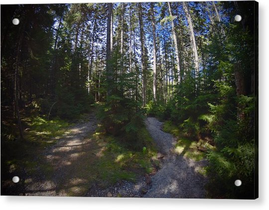 Which Path? Acrylic Print