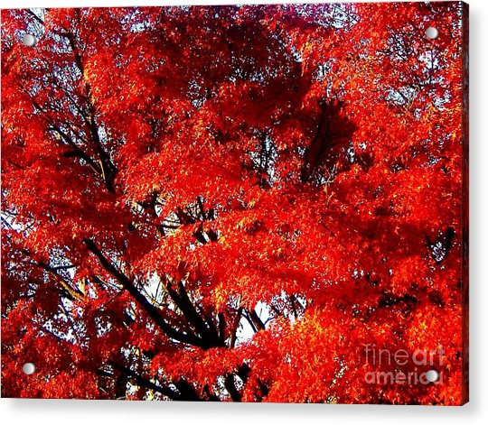 Whispers Of A Japanese Maple Acrylic Print by Juliette Carter-MarShall