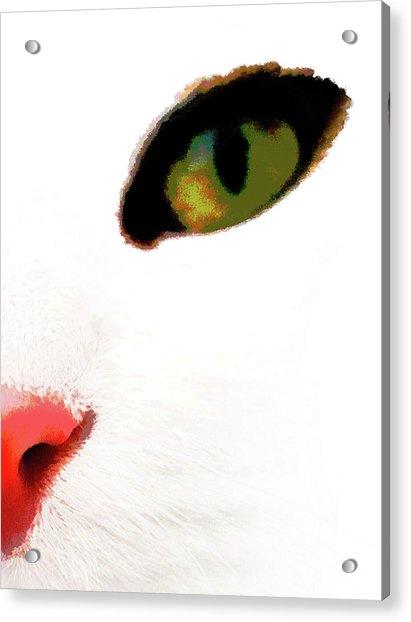 White Cats Face Acrylic Print