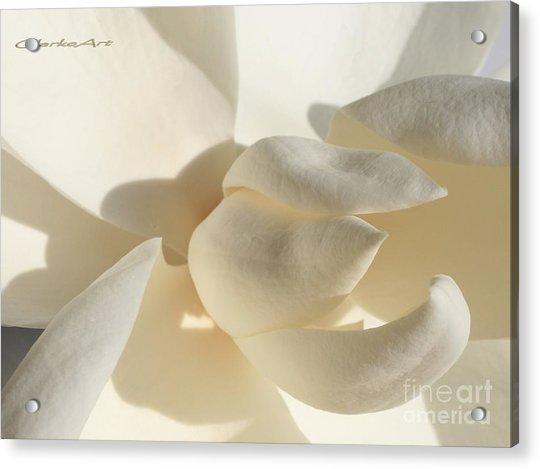 White-on-white Magnoia Acrylic Print