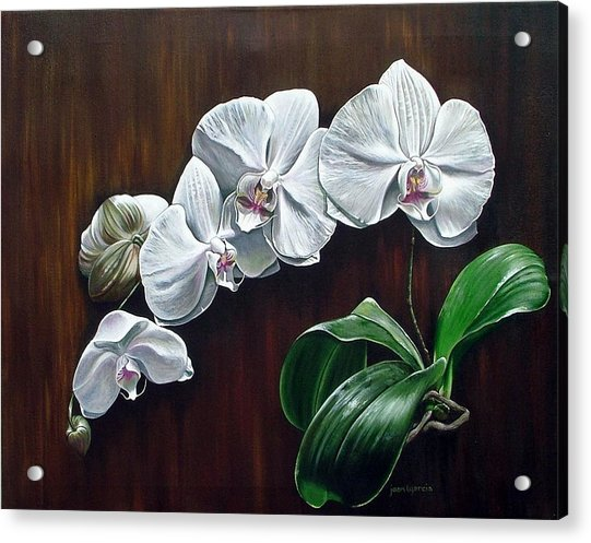 White Orchids II Acrylic Print