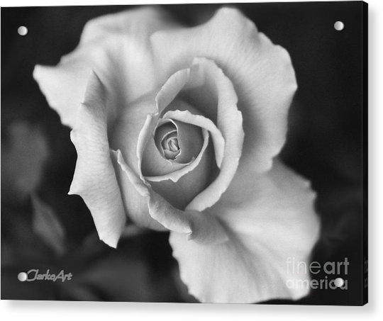 White Rose On Black Acrylic Print