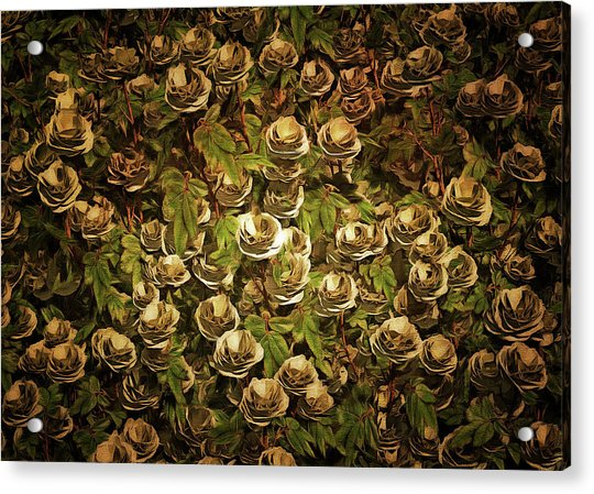 Acrylic Print featuring the painting White Roses by Jan Keteleer