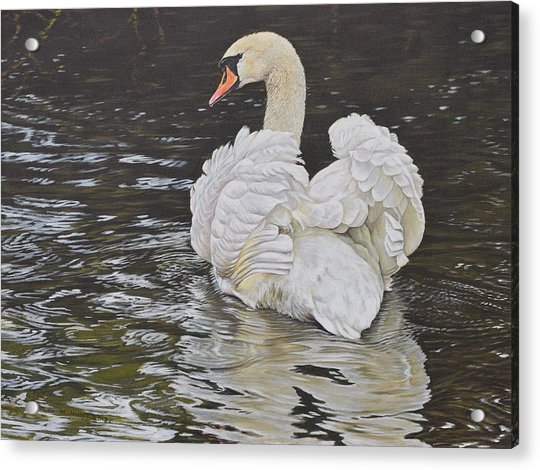 Acrylic Print featuring the painting White Swan by Alan M Hunt