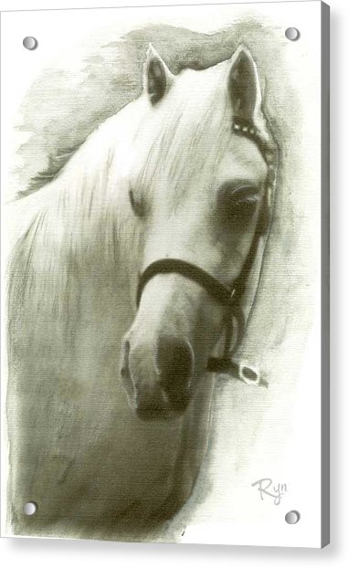 White Welsh Pony Acrylic Print