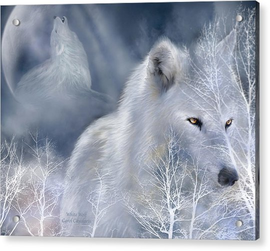 White Wolf Acrylic Print
