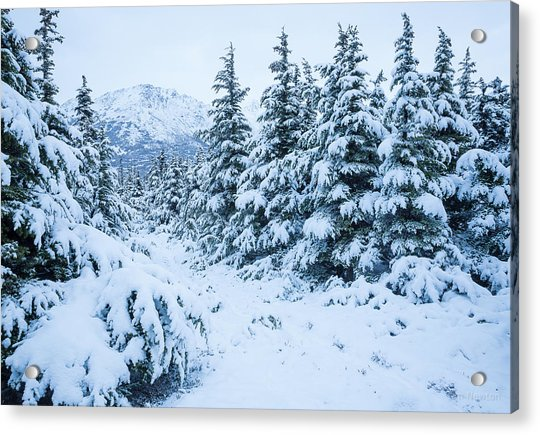 Acrylic Print featuring the photograph Winter Arrives by Tim Newton
