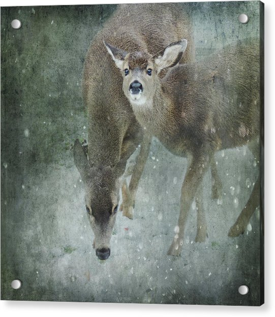Acrylic Print featuring the photograph Winter Foraging by Sally Banfill