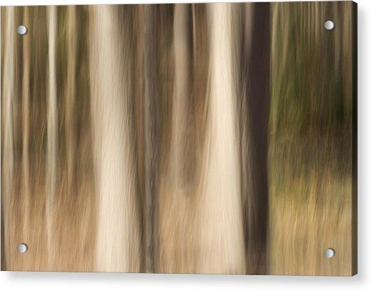 Winter Grove Acrylic Print