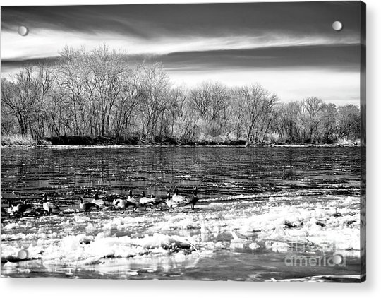 Winter In The Delaware Valley Acrylic Print by John Rizzuto