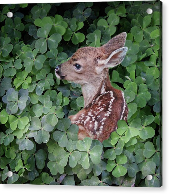 Acrylic Print featuring the photograph Wood Sorrel Blanket by Sally Banfill