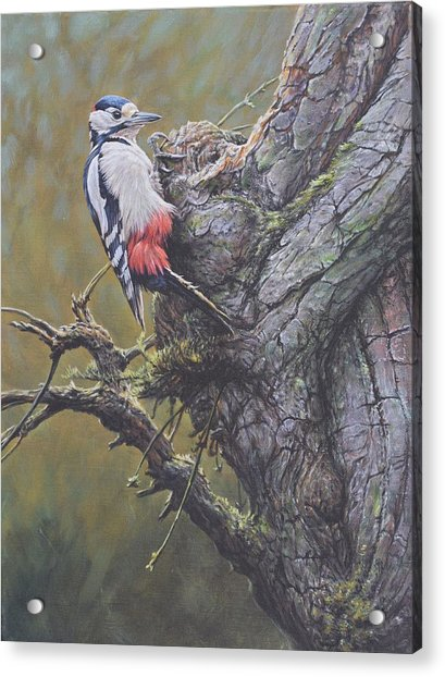 Acrylic Print featuring the painting Woodpecker On Tree by Alan M Hunt