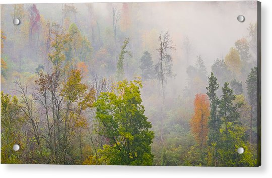 Woods From Afar Acrylic Print