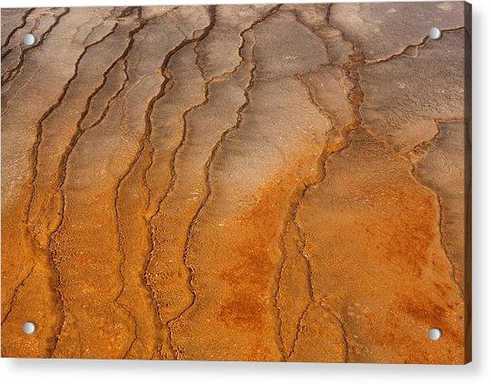 Yellowstone 2530 Acrylic Print
