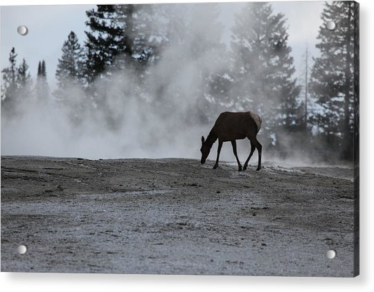 Yellowstone 5456 Acrylic Print