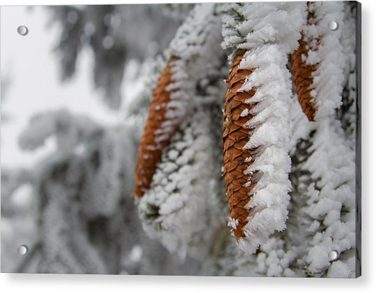 Yep, It's Winter Acrylic Print